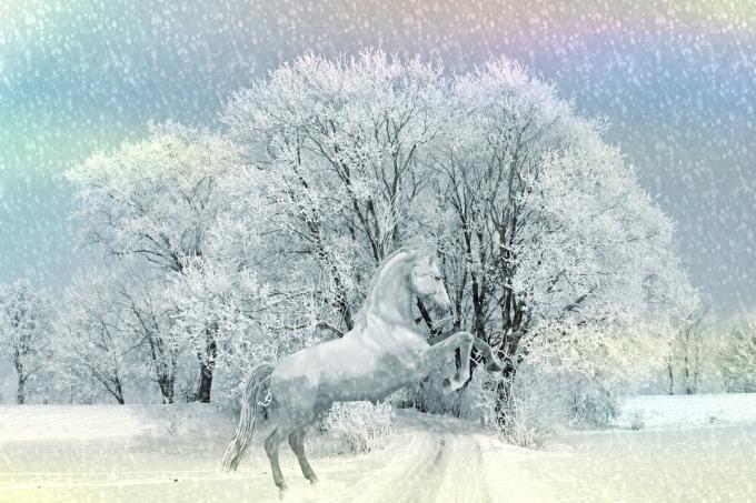 horse-1310034_960_720