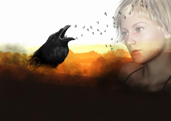 raven-1317295_960_720