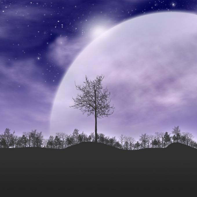 trees-490647_960_720
