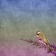 background-1424676__180