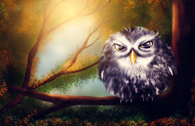 owl-2020011_960_720