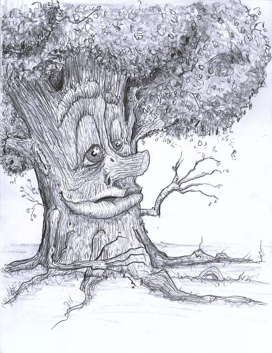 tree-1817755_960_720