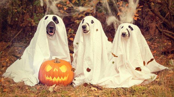halloween-2870607__340