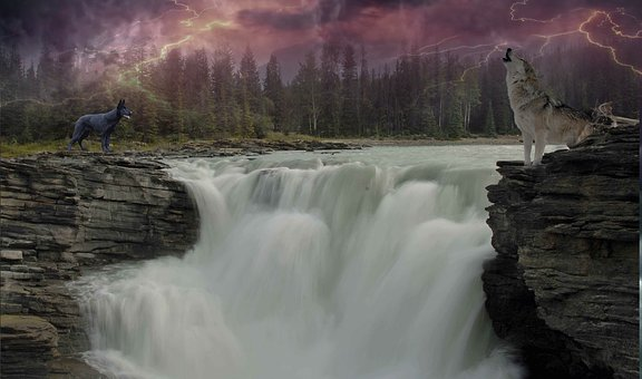 wolf, dog, waterfalls