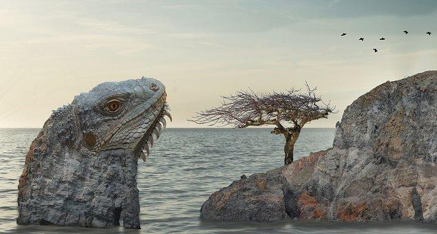 Big lizard, rock