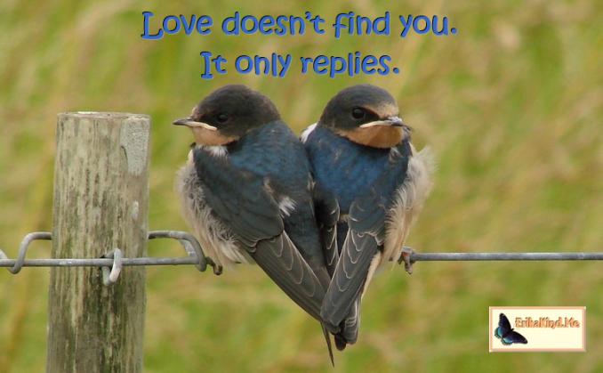 Love replies.PNG