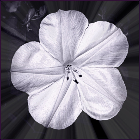 moon_flower-Haiku_Friday-Poetry-Vashti Quiroz Vega-tanka-romance-poem-Vashti Q-Twitter-RonovanWrites
