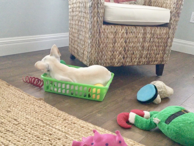 Twiggy's toy basket