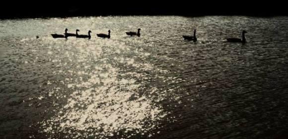 Shadows, by Nick Verron