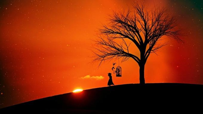 evening-sun-2383966_960_720.jpg