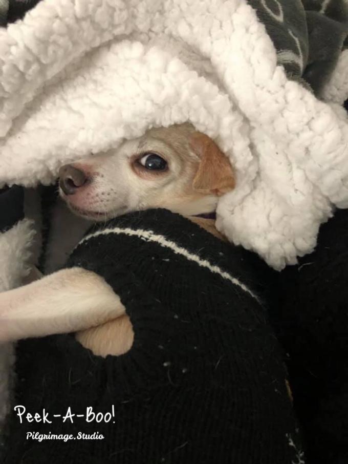 Peek-a-Boo! Love, Peanut
